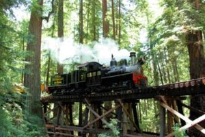 A steam train roaring through Santa Cruz Redwoods